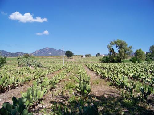 Rancho Agricola  15 has en santa lucia Tesistan ideal para fraccionar